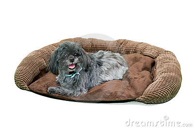 Furry dog on dog bed