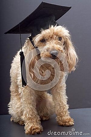 Furry Graduate