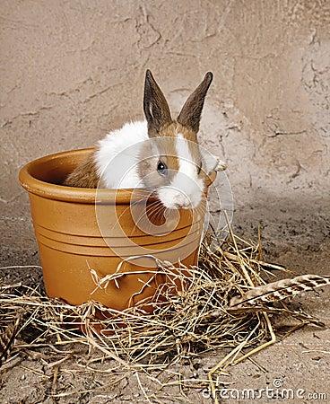 Furry rabbit in rustic flowerpot