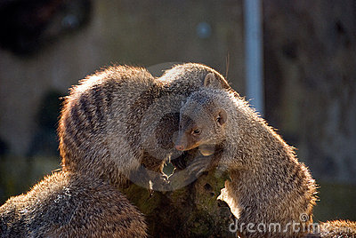 Furry young animals hugging