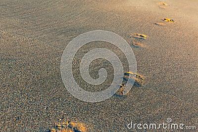 Futprints on the sand