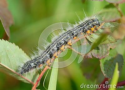 Fuzzy Caterpillar Macro
