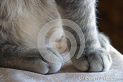 Fuzzy paws of a ktten.. A pettable texture. Grey tabby cat.