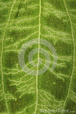 Fuzzy surface of a green leaf as a background