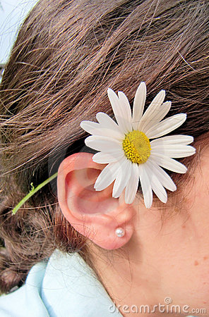 Gänseblümchen hinter Ohr