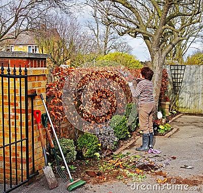 Weiblicher erwachsener gärtner der eine buchehecke mit garten