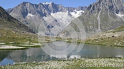 Górskie alpejskie szczyty pokryte śniegiem i krystalicznie czysty strumień alpejski zdjęcie wideo