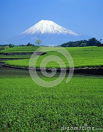 Góry fuji xi.