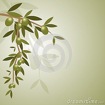 Gałęziasta tło oliwka
