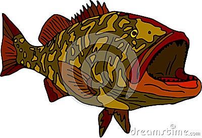 Gag grouper