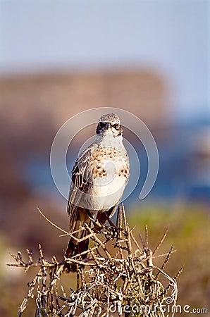 Galapagos Bird portrait
