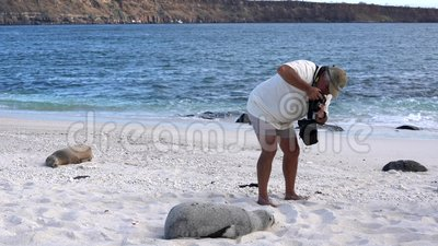 Galapagos, Equateur - 2019-06-20 - Le guide prend des photos d'un petit lion de mer recouvert de sable banque de vidéos