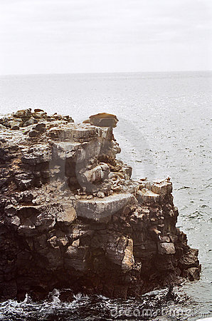 Galapagos sea lion on cliff