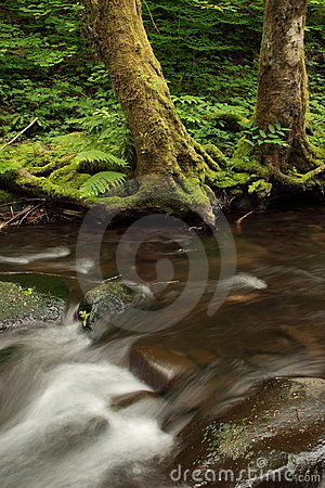 Free Gales Creek Stock Photos - 2548903