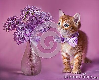 Gallant Red kitten