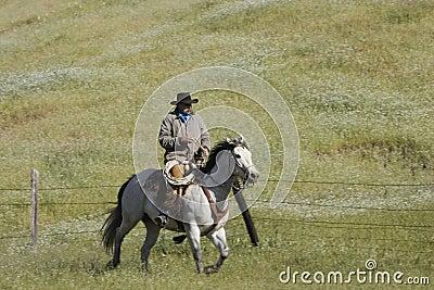 Galloping Cowboy