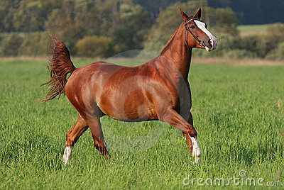 Galloping horse on field