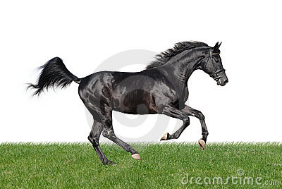 Galloping horse in the grass isolated on white