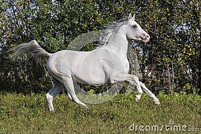 last tweets about image de cheval blanc au galop. Black Bedroom Furniture Sets. Home Design Ideas