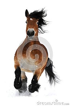 Galope de la corrida del caballo de bahía en la nieve