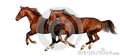 Galope de los caballos de Budenny