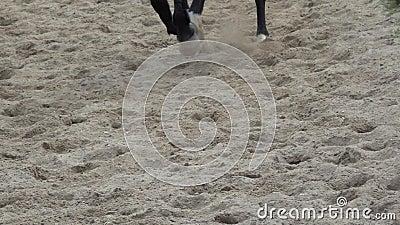 Galope de los enganches del caballo Cantidad de la c?mara lenta almacen de metraje de vídeo