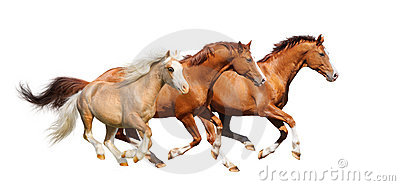 Galope de tres caballos del alazán - aislado en blanco