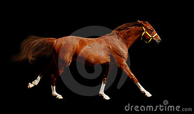 Galoppi del cavallo dell acetosa