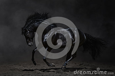 Galoppierendes schwarzes Pferd auf dunklem Hintergrund