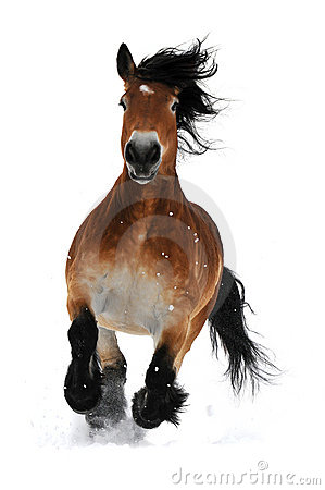 Galoppo di esecuzione del cavallo di baia sulla neve