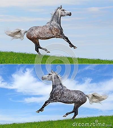 Galopujący kolorów konie ustawiają dwa różnorodnego