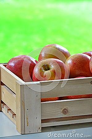 Galowi jabłka