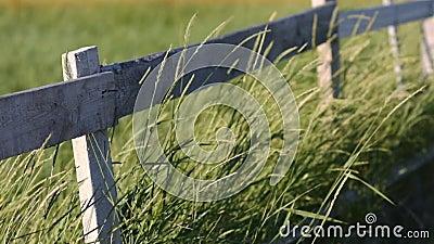 Gambi di erba che ondeggiano nel vento davanti ad un recinto di legno archivi video
