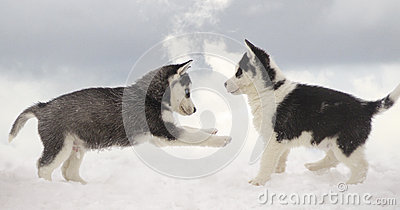 Game On A Frost Royalty Free Stock Photo - Image: 26623625