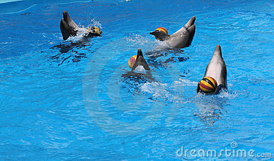 Games of dolphins with balls.