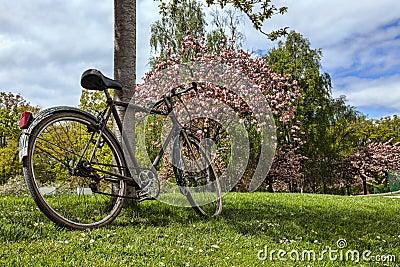 Gammal cykel i en parkera i vår
