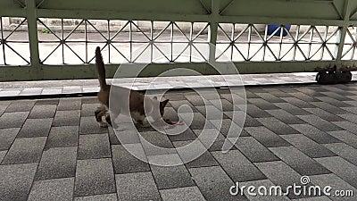 Gang in het Verdwaalde Droge Voedsel van Moeder Jonge Zwarte Cat Calling Baby Which Eating op de Vloer om weg te gaan en op te st stock videobeelden