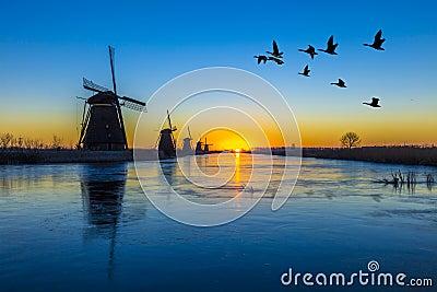 Gansos que voam sobre o nascer do sol no alinhamento congelado dos moinhos de vento