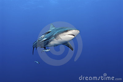 Gaping shark