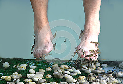 Garra rufa pedicure stock photo image 59506287 for Fish spa treatment