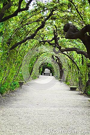 Garden arbor tunnel
