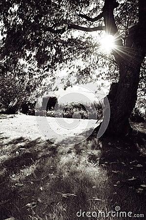 garden Autum sun