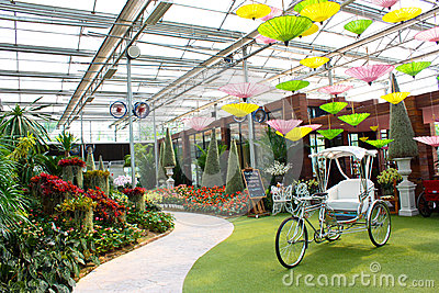 Garden with bike