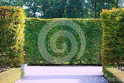 Garden Bushes Royalty Free Stock Photo Image 34565325