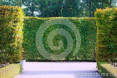 Garden Bushes Royalty Free Stock Photo Image 34565325