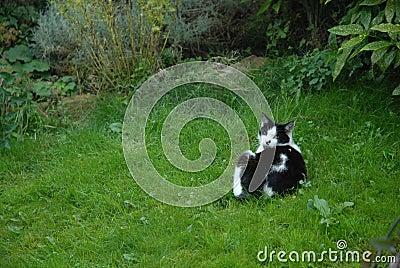 A garden cat lying on grass