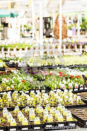 Garden Center Editorial Image Image 52761215