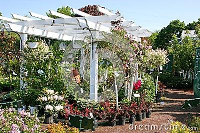 Garden Center Pergola