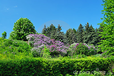 Garden with chestnut and lilac trees