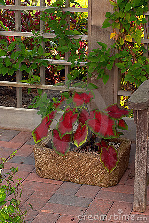 Free Garden Container Royalty Free Stock Photography - 16547